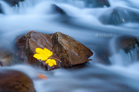 Yellow leaf on a stone in near of a waterfall - Stock Photo - Images
