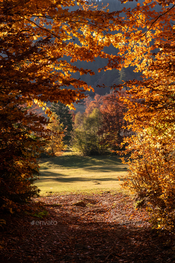 Autumn leaves with blue sky background - Stock Photo - Images