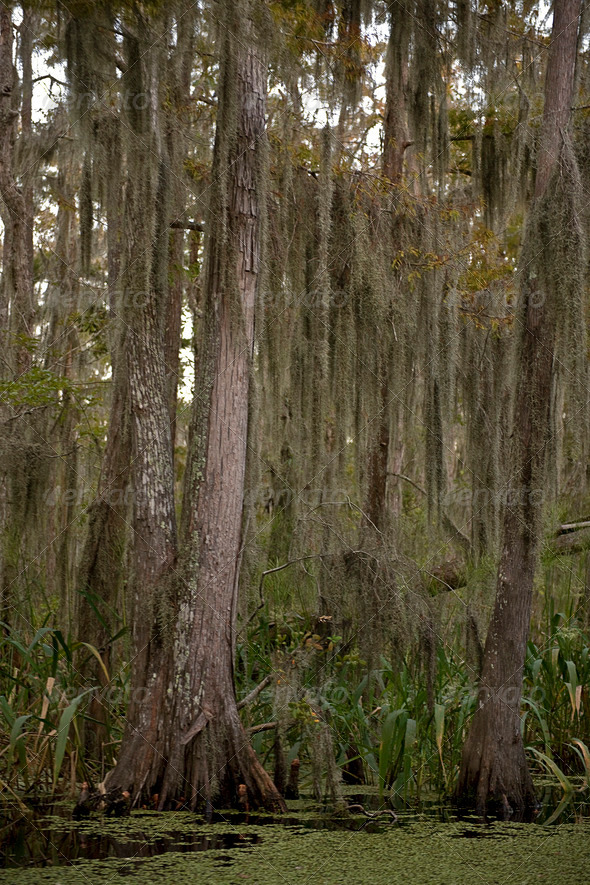 Swamp near New Orleans, Louisiana - Stock Photo - Images