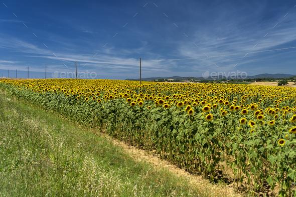 Rural landscape in Maremma at summer - Stock Photo - Images
