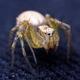 Tiny spider on velvet - PhotoDune Item for Sale