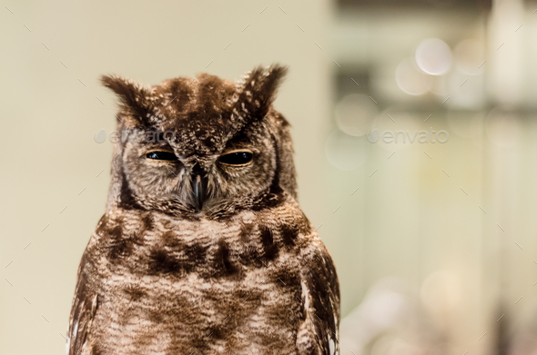 in ironic owl - Stock Photo - Images