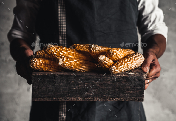 Farmer handles fresh corn in a wooden box - Stock Photo - Images