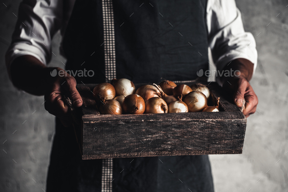 Organic vegetables. Healthy food. Fresh organic onion in farmers hands - Stock Photo - Images