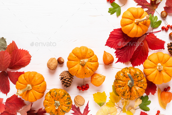 Autumn pumpkins with fall leaves, berries on white background. Thanksgiving day or halloween holiday - Stock Photo - Images