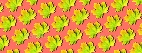 Creative layout of colorful autumn leaves. Banner with yellow, orange and green maple leaves pattern - Stock Photo - Images