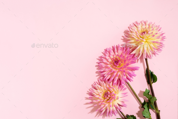 Festive flower bouquet over pastel pink background, copy space. Top view. Creative greeting card - Stock Photo - Images