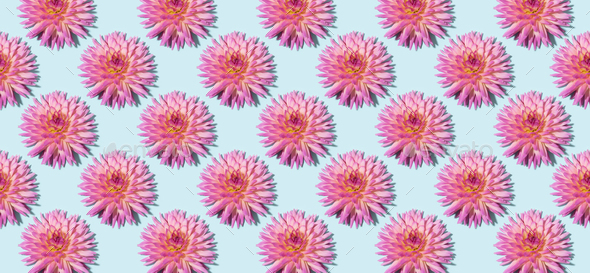 Floral pattern made of pink flowers over pastel blue background. Festive spring and summer - Stock Photo - Images