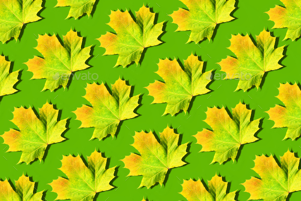 Golden autumn concept. Yellow and orange maple leaves pattern on green background. Top view. Colors - Stock Photo - Images