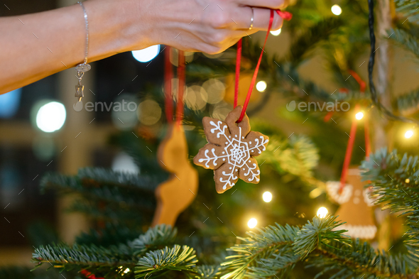 Female hand hangs a gingerbread snowflake on the Christmas tree - Stock Photo - Images