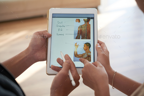 Discussing human anatomy - Stock Photo - Images