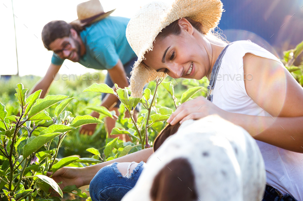 Young horticulturist couple harvesting fresh vegetables with dog - Stock Photo - Images