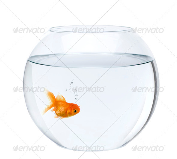 Goldfish in fish bowl, in front of white background, studio shot - Stock Photo - Images