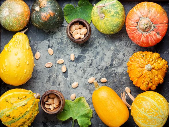 Set autumn pumpkins - Stock Photo - Images