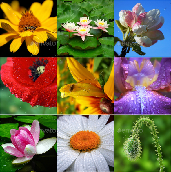 Collage of flowers - Stock Photo - Images