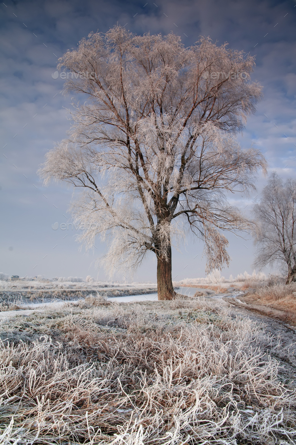 Beautiful trees in hoarfrost against the blue sky. Winter landscape - Stock Photo - Images