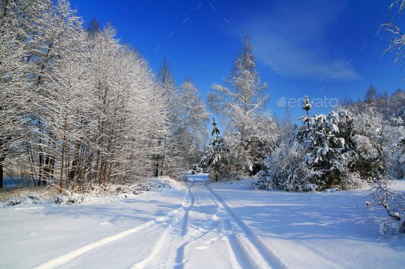 Forest after a snowfall. Beautiful winter landscape. Christmas card - Stock Photo - Images