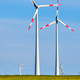 Wind turbines in a thriving rapeseed field - PhotoDune Item for Sale