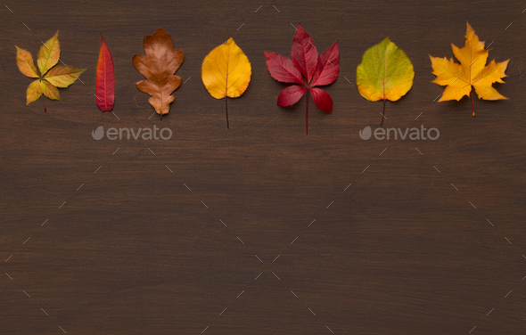 Autumn colorful line of dry leaves diversity - Stock Photo - Images