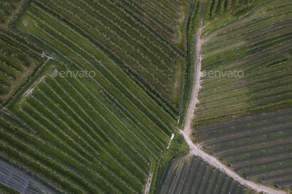 top view of Trentino apple plantations in Italy - Stock Photo - Images