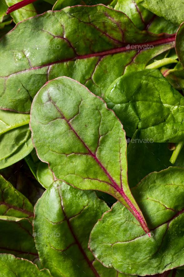 Raw Green Organic Baby Beet Greens - Stock Photo - Images