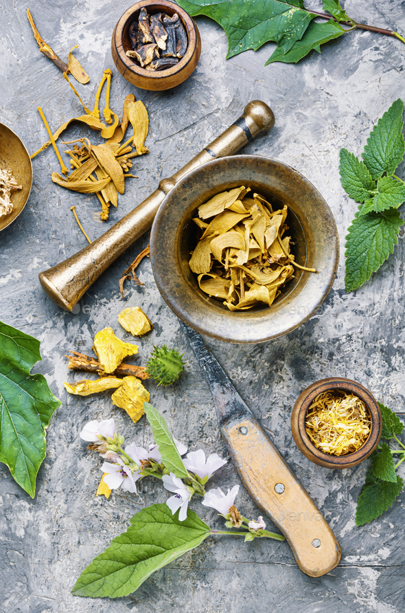 Healing medical herbs - Stock Photo - Images