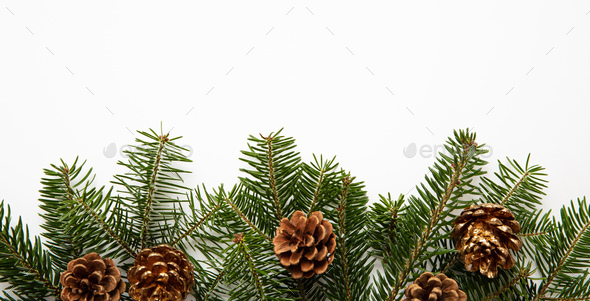 Fir twig and pine cones, white background - Stock Photo - Images