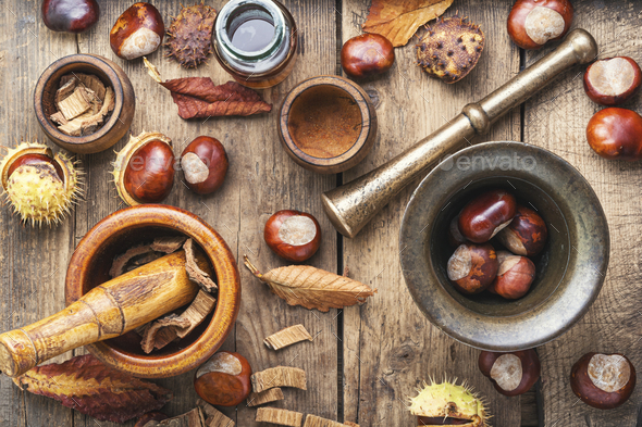 Chestnut in herbal medicine - Stock Photo - Images