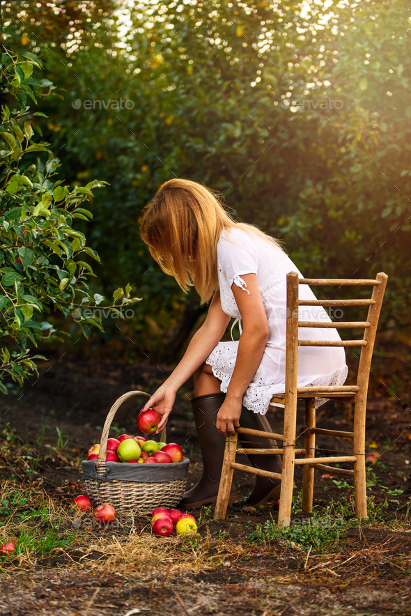A girl with white dress in apple garden pick apples in basket - Stock Photo - Images
