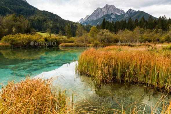Zelenci Natural Reserve in Triglav National Park Slovenia - Stock Photo - Images