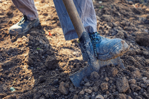 Man digging over loosening soil with a spade - Stock Photo - Images