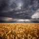 Cloudy morning over wheat field - PhotoDune Item for Sale