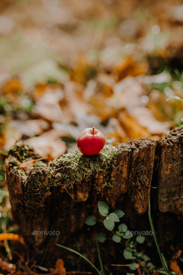Red apple on tree stump - Stock Photo - Images