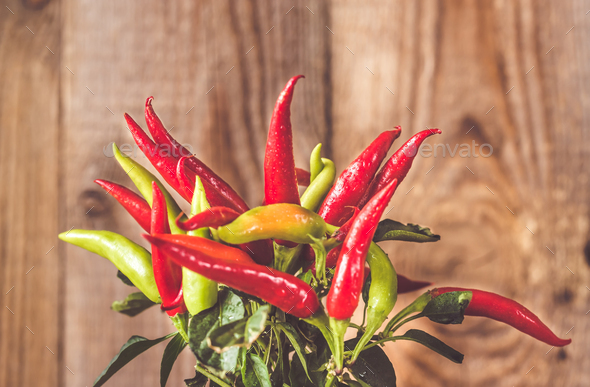 Capsicum mix in the pot - Stock Photo - Images