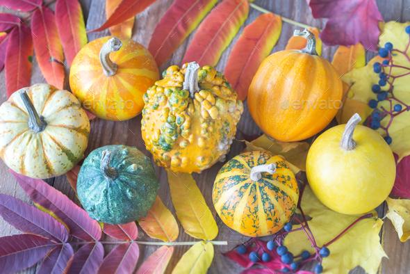 Ornamental pumpkins - Stock Photo - Images