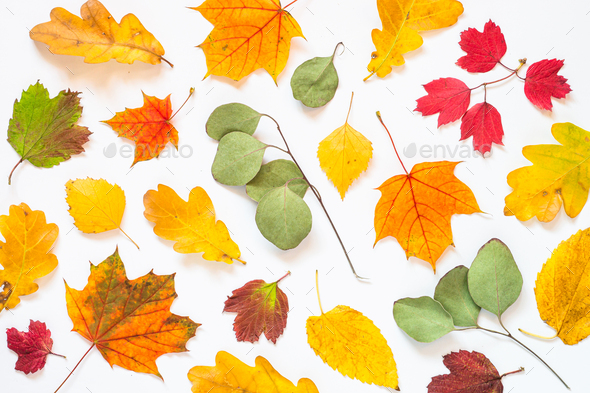 Autumn flat lay background with leaves on white - Stock Photo - Images