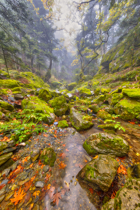 Moist mountain stream forest landscape - Stock Photo - Images