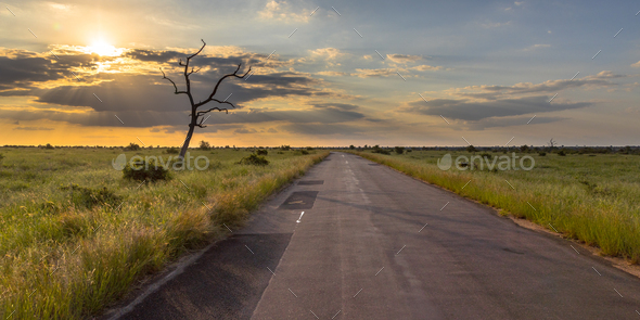 Paved road through savanna - Stock Photo - Images