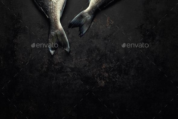 Dorado fish with on dark background - Stock Photo - Images
