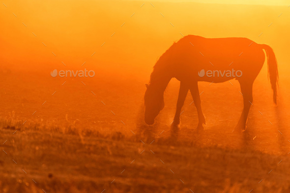 Wild horse grazes in the meadow at sunset - Stock Photo - Images