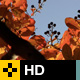 Fall Leaves Series - Clip 005 - VideoHive Item for Sale