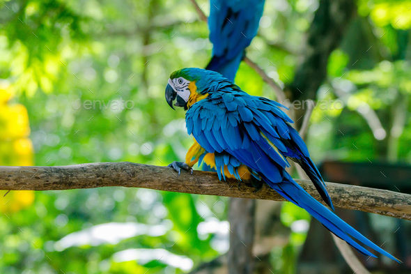 Blue and yellow macaw - Stock Photo - Images