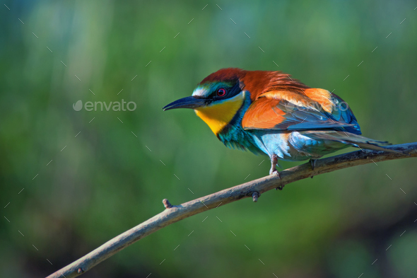 Exotic tropical bird - Stock Photo - Images