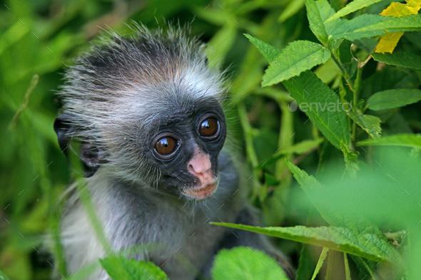 Baby monkey - Stock Photo - Images