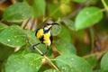 Purple sunbird or Cinnyris asiaticus - PhotoDune Item for Sale