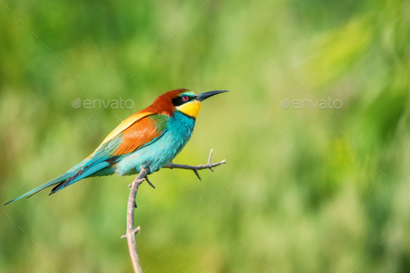 Exotic colorful tropical bird - Stock Photo - Images