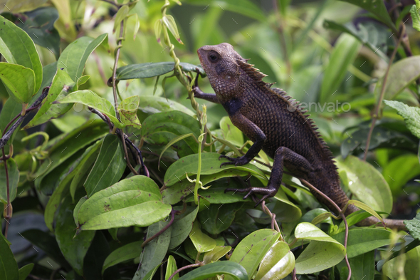 Exotic lizard - Stock Photo - Images