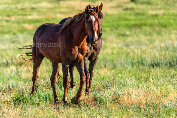 Two wild horses in the sunlit meadow - Stock Photo - Images