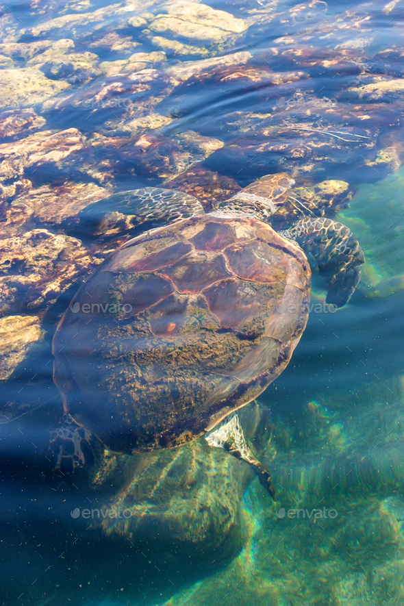 Beautiful sea turtle on surface - Stock Photo - Images