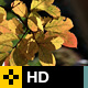 Fall Leaves Series - Clip 006 - VideoHive Item for Sale